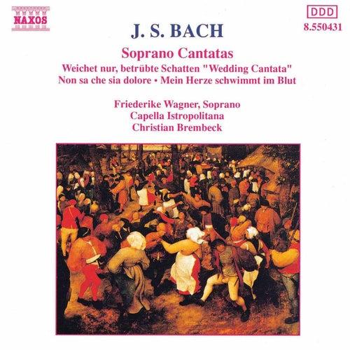 Soprano Cantatas by Johann Sebastian Bach
