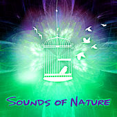 Sounds of Nature - Soothing Sounds for Aromatherapy, Relaxation, Wellness Spa, Yoga, Meditation, Trouble Sleeping & Reduce Stress by Nature Sounds for Sleep and Relaxation