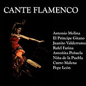 Cante Flamenco by Various Artists