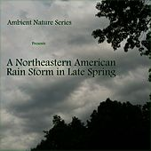 A Northeastern American Rain Storm in Late Spring by Ambient Nature Series