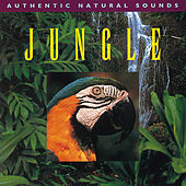 Jungle by Natural Sounds