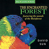 The Enchanted Forest by David Sun