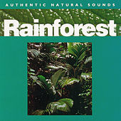 Rainforest by Natural Sounds
