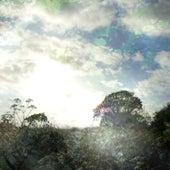 Spring Light by Ishq