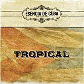 Tropical by Tropical
