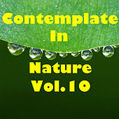 Contemplate In Nature, Vol.10 by Various Artists