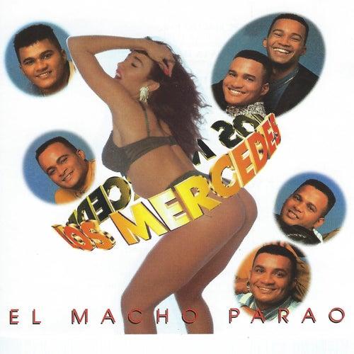 El Macho Parao by Mercedes
