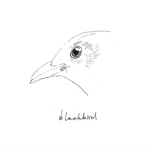 Blackbird by Blackbird
