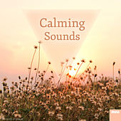 Calming Sounds by Sounds Of Nature