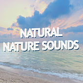 Natural Nature Sounds by Various Artists