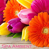 Spa Ambient - Relaxing Zen Spa Music & Background Instrumental Music for Spa Resorts, Spa Massage and Relaxation by Serenity Spa: Music Relaxation