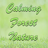 Calming Forest Nature by Various Artists