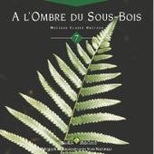 Emeraude:  a l'ombre du sous bois by Olivier Renoir