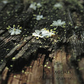 Florealia Nocturna by Aglaia