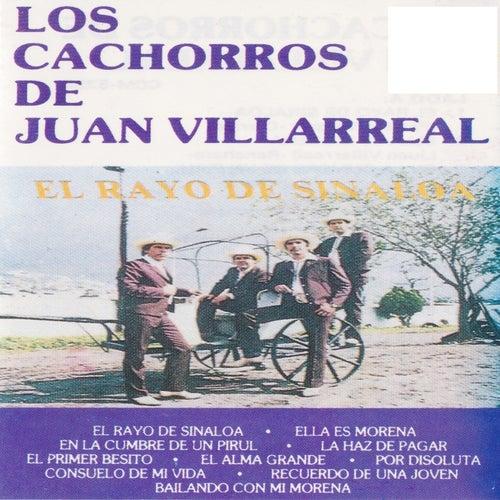 El Rayo De Sinaloa by Los Cachorros de Juan Villarreal