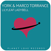 Lilyleaf Ladybell by York