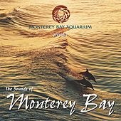The Sounds of Monterey Bay by Tim Heintz