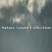 Nature Sound Collection by Various Artists