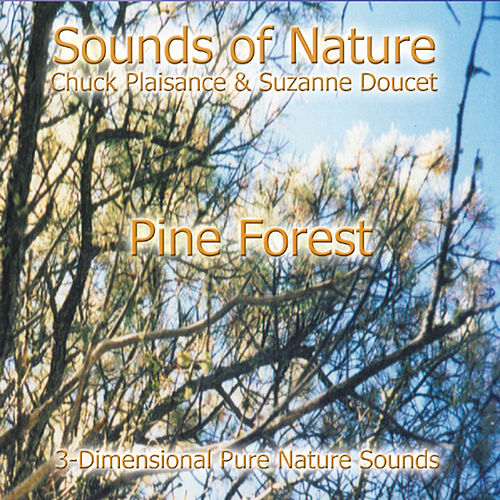 Pine Forest by Suzanne Doucet & Chuck Plaisance