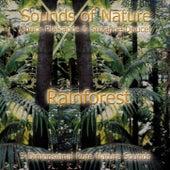 The Rainforest by Suzanne Doucet & Chuck Plaisance