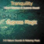 Cypress Magic by Suzanne Doucet & Chuck Plaisance