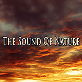The Sound Of Nature by Various Artists