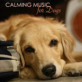 Calming Music for Dogs - Relaxing Music for Dogs and Cats, Peaceful Pet Music Therapy for Dog Anxiety, to Help Them During Fireworks by Pet Music World