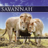 Savannah by Global Journey