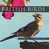 British Birds by Global Journey