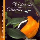 A L'écoute Des Oiseaux by Quiétude: Musique