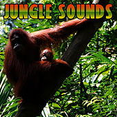 Jungle Sounds by Sound Effects