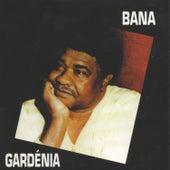 Gardénia by Bana