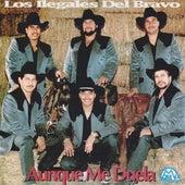 Aunque Me Duela by Los Ilegales del Bravo
