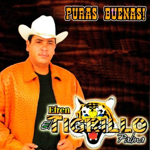 Puras Buenas by El Tigrillo Palma