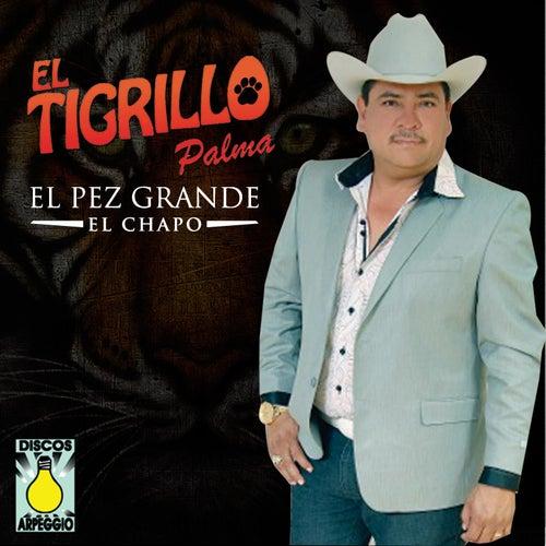 El Pez Grande (El Chapo) by El Tigrillo Palma