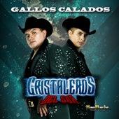 Gallos Calados by Cristaleros Del Sur