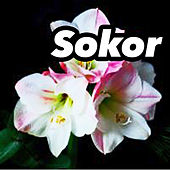 Sokor by Various Artists