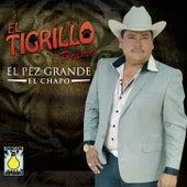 Pez Grande (El Chapo) by El Tigrillo Palma