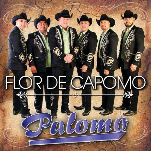 Flor De Capomo by Palomo