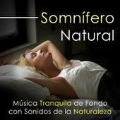 Somnífero Natural - Escucha esta Música Tranquila de Fondo con Sonidos de la Naturaleza para Ayudarte a Dormir y lograr una Buena Noche by Various Artists