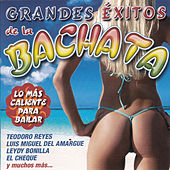 Grandes Éxitos de la Bachata by Various Artists