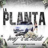 La Planta by Kilate