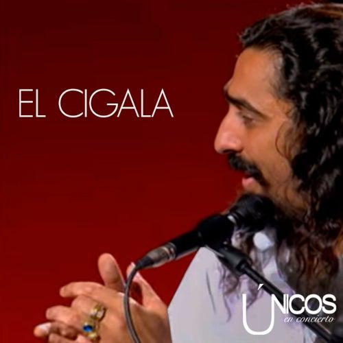 Únicos en Concierto. Diego el Cigala (En Directo) by Diego El Cigala