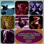 Animal & Bird Sounds by Sound Effects