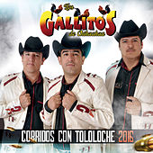 Corridos Con Tololoche 2016 by Los Gallitos de Chihuahua