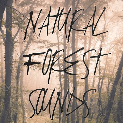 Natural Forest Sounds by Nature Sounds Nature Music