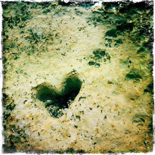 Follow Your Heart by Ola