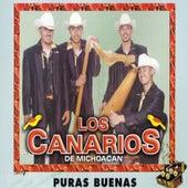 Puras Buenas by Los Canarios De Michoacan