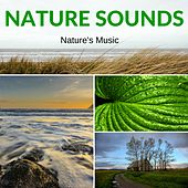 Nature Sounds by Nature's Music