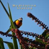 Bird Songs for Meditation by Meditation Station